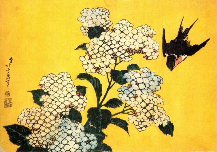 Кацусика Хокусай, «Гортензия и ласточка», 1834 г.