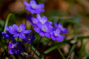 Какие многолетники подобрать для цветника?