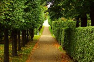 Как сделать простую растительную изгородь?