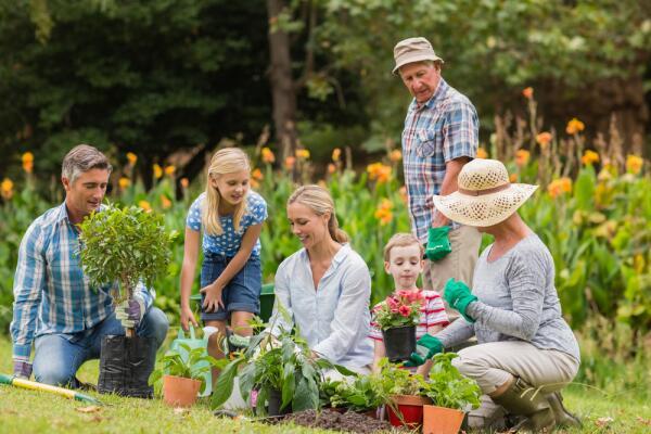 Начали осваивать садовый участок? Большие и маленькие дачные хитрости - рассада, полив и метод Миттлайдера