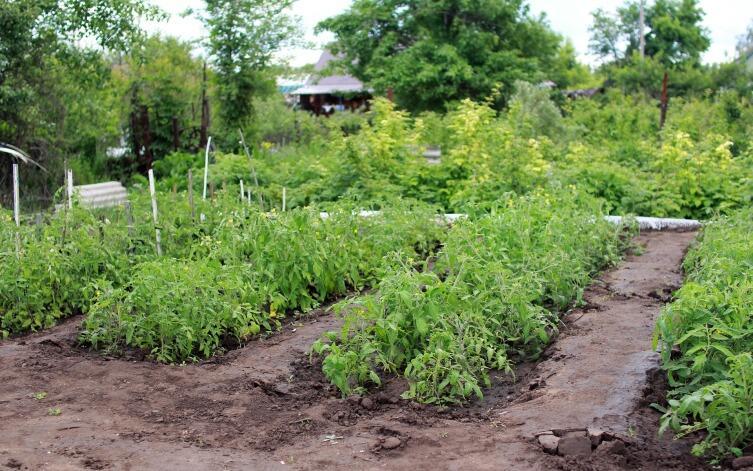 Начали осваивать садовый участок? Большие и маленькие дачные хитрости - экономим площадь посадки