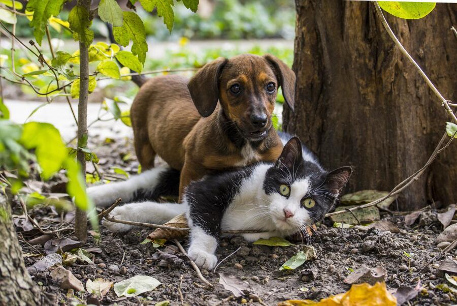 Любите собак, но нет возможности содержать их? Заведите кошку!