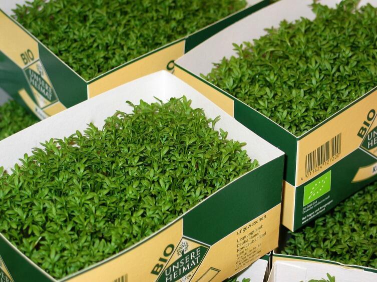 В народной медицине применяют различные препараты из листьев, корней и семян кресс-салата