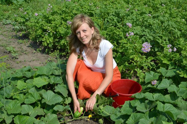 Как избежать «битвы за урожай» на дачном участке? Выращивание огурцов