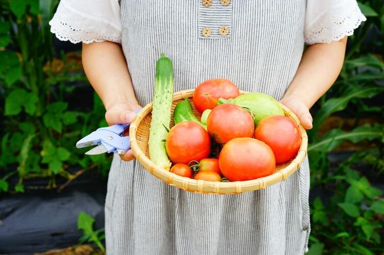 Как избежать «битвы за урожай» на дачном участке? Выращивание помидоров