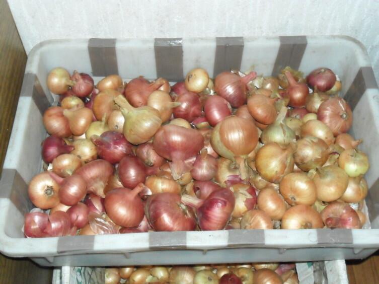 Урожай лука 2011 г. на хранении