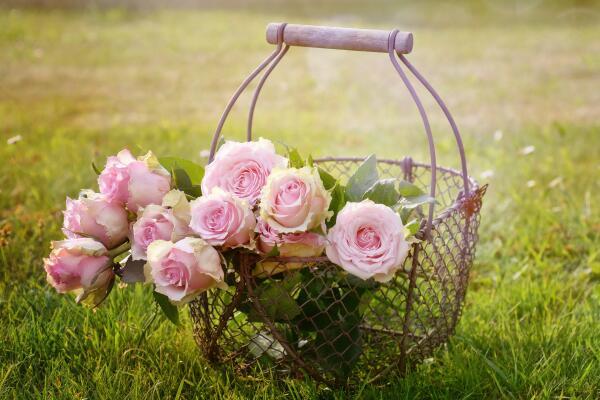 Какие цветы посадить на даче? Розы