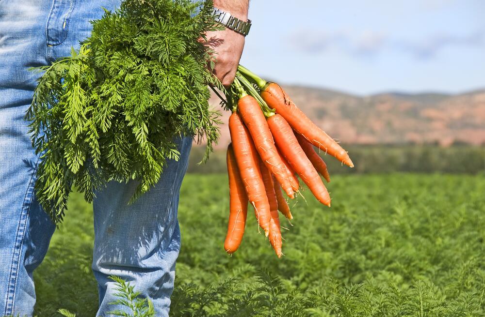 Секс и морковь