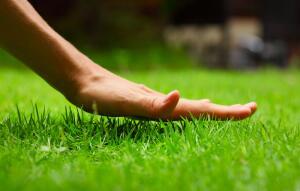 Как устроить рулонный газон у себя на даче?