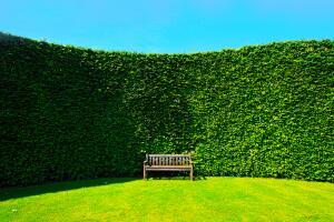 Живая изгородь: как сделать ограду «из ничего» и даром?