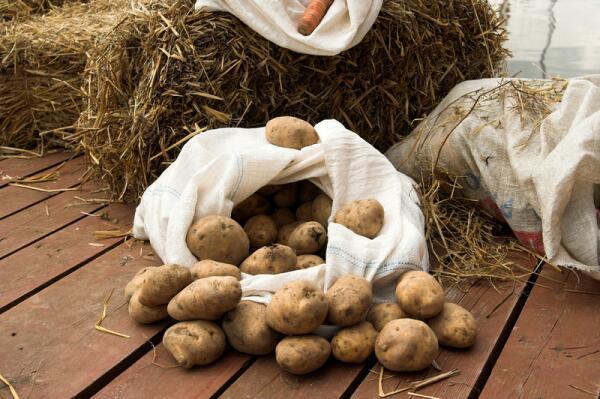 Как выращивать картофель под сеном? Фотоотчёт