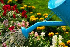 Чем заниматься в саду, огороде и цветнике в августе?