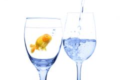 Не всякая рыба любит прозрачную и чистую воду - лучше доверьтесь фильтру!