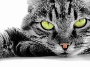 О чём говорит ваша кошка?