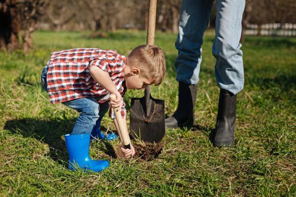 В каком темпе можно осваивать землю начинающим дачникам?