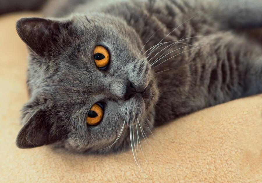 Как котики приручили людей?