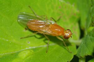 Что делать, если ребенок боится насекомых?