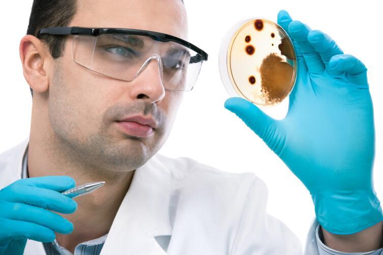 Что такое диета с точки зрения бактерии-симбионта?