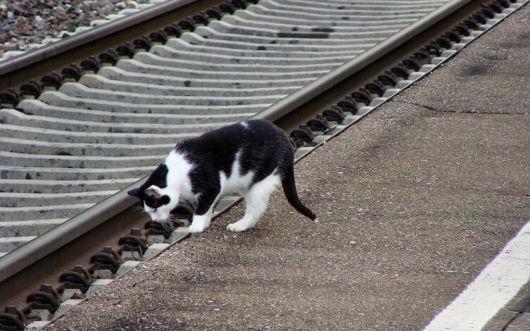 Как потерявшиеся коты находят дорогу домой?