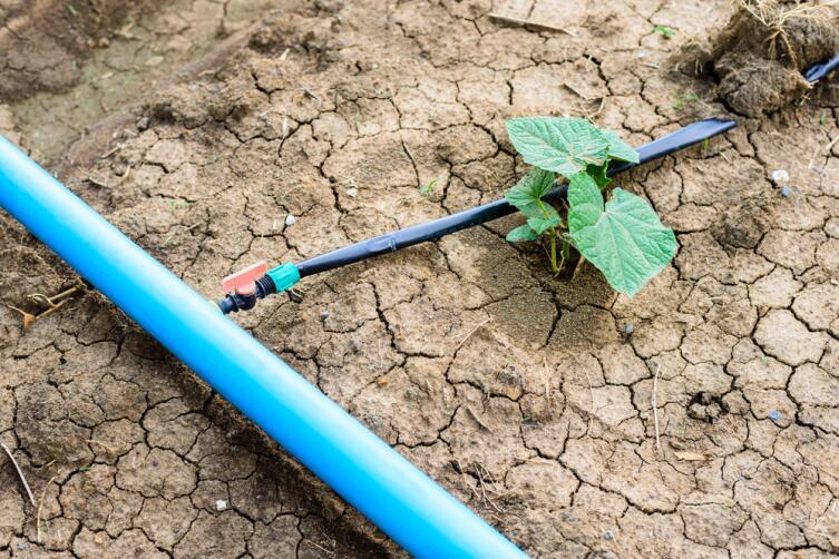 Вода должна поступать к корням