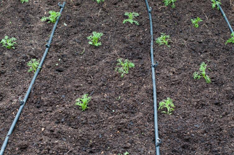 Как поливать растения в жару?