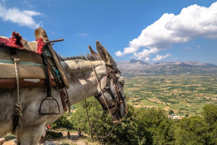 Упрямый работник туристического бизнеса, Кипр