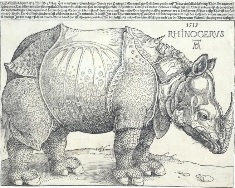 Альбрехт Дюрер, «Носорог», 1515 г.
