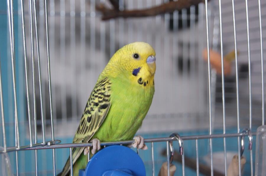 Есть ли что-то общее между человеком и попугаем?