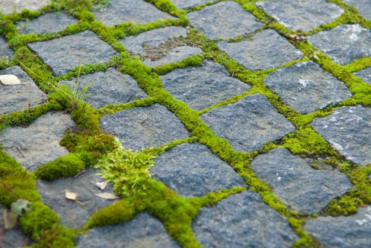 Как вырастить мох?