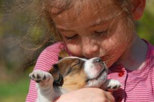 Как воспитать у ребёнка любовь к братьям нашим меньшим?