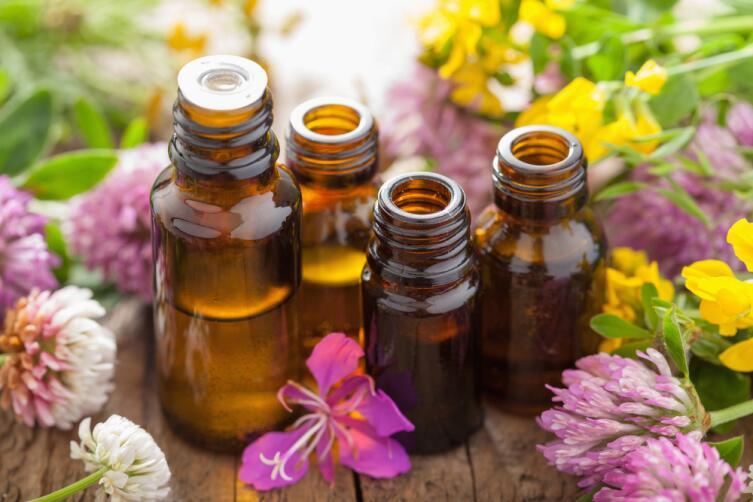 Запаситесь эфирными маслами горчицы, гвоздики, аниса - насекомые не переносят эти запахи