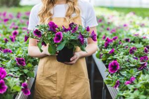 Присутствие в саду пижмы отпугнет многих вредителей
