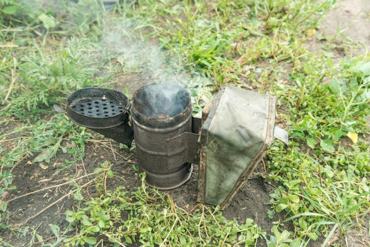 В борьбе с белокрылкой помогает окуривание растений дымом от тлеющих черемуховых веток