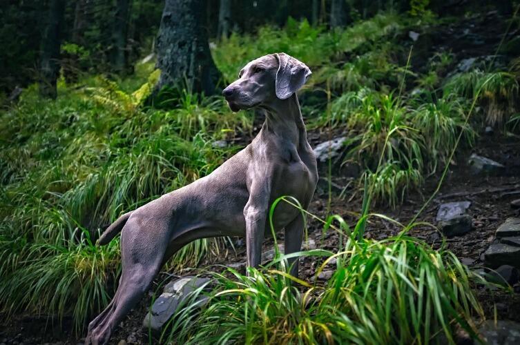 Как защитить собаку от клещей летом?