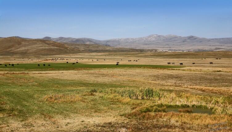 Армянские пастбища