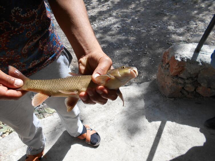 Ловись, рыбка