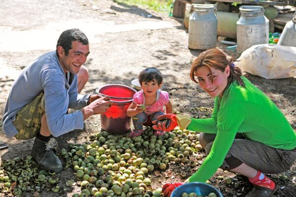 Над урожаем грецких орехов трудится вся семья