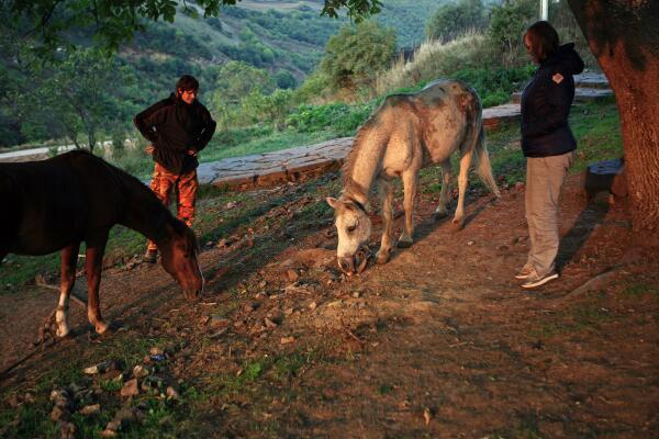 Красивые Татевские лошади, наши спутники по ночлегу, лакомятся яблоками