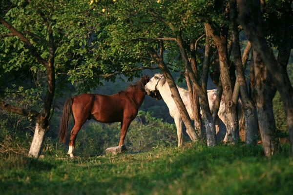 Лошадиный рай Татева
