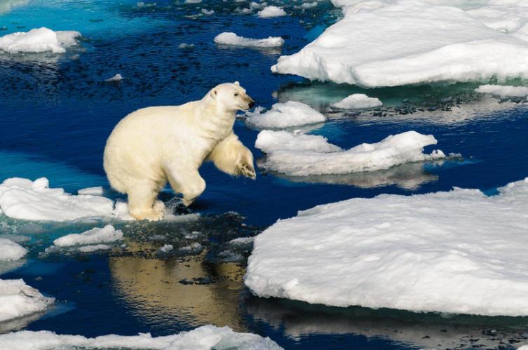 Как попасть на Северный полюс? Часть 1. История