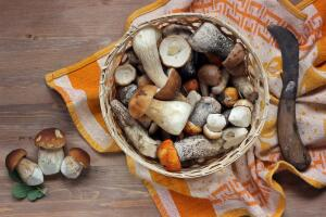 Когда собираться за грибами? Календарь грибника