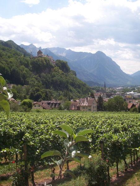 Виноградные угодья на окраине Вадуца