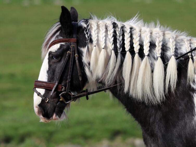 Цыгане умели продать любую лошадь, даже надутую