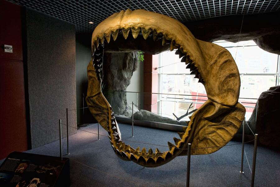 Реконструированные челюсти мегалодона, выставленные в Национальном аквариуме Балтимора