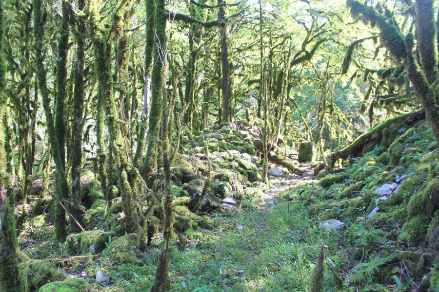 Самшитовый лес в окрестностях села Солох-Аул