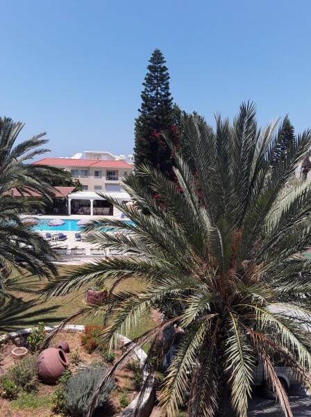 Море и пальмы располагают к флирту