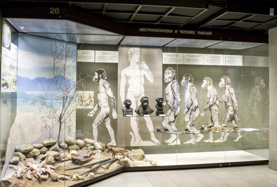Россия, Москва, Государственный Дарвиновский музей