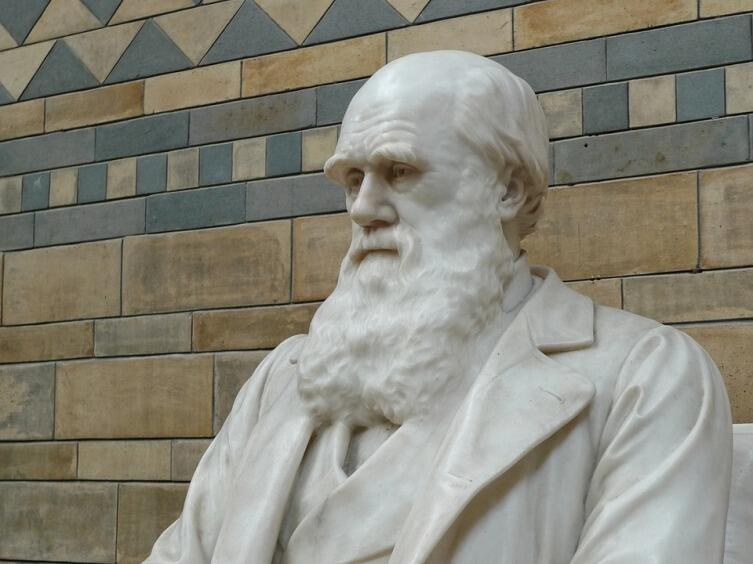 Памятник Ч. Дарвину в Музее естествознания в Лондоне, Великобритания