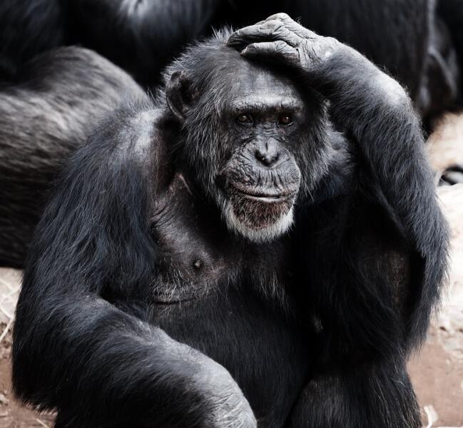Почему обезьяны не становятся людьми?