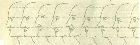 Соотношение частей лица